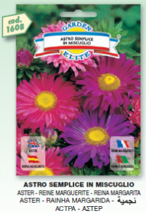 fiori2_r1_c31.png