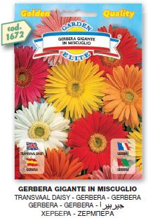 fiorigolden1_r3_c21.png